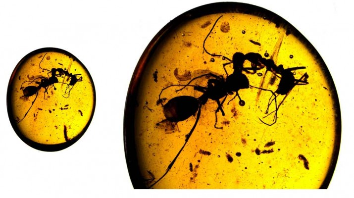 ancient-ant-battle