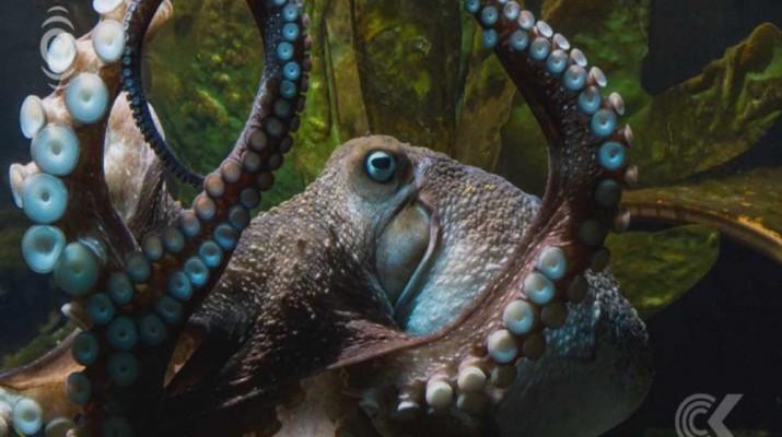 inky-octopus
