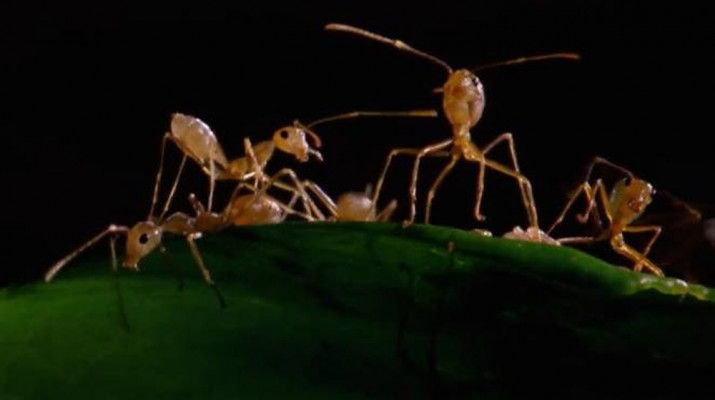 green-ants-1