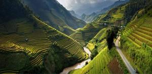 rice-terrace-fields-vietnam-1