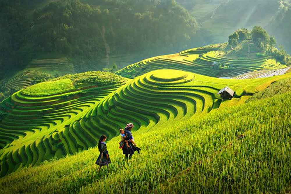 rice-terrace-fields-vietnam-2