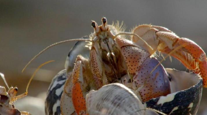 hermit-crab-1