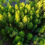 ประเทศอินเดียตั้งเป้าทำลายสถิติโลก ปลูกต้นไม้ 50 ล้านต้นภายในวันเดียว