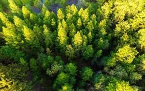 trees-india-1