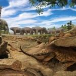 นักวิจัยพบข้อมูลใหม่ กระดองเต่าถูกพัฒนาขึ้นมาเพื่อการขุดโพรงใต้ดิน