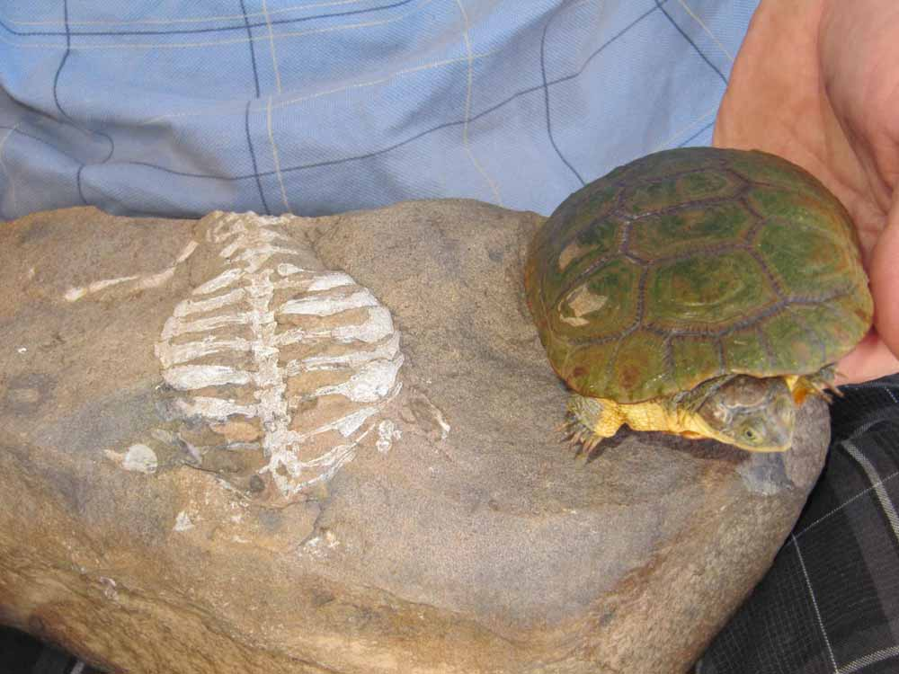 turtle-shell-3