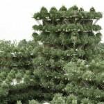 บ้านไม้ไผ่ดีไซน์ใหม่เป็นระบบแยกส่วน เชื่อมต่อกับธรรมชาติมากยิ่งขึ้น