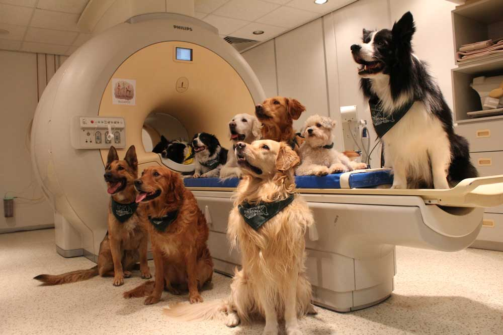 dog-brain-2