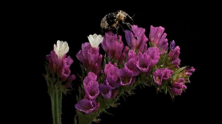 flower-bug-1
