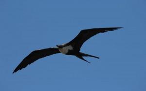 flying-bird-sleep-1