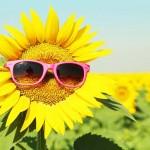 """""""นาฬิกาชีวิต"""" คือผู้บงการให้ดอกทานตะวันหน้าเข้าหาดวงอาทิตย์?"""