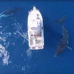 ชมความน่ารักของเจ้ายักษ์วาฬหลังค่อม 3 ตัวรายล้อมรอบเรือกลางทะเลลึก