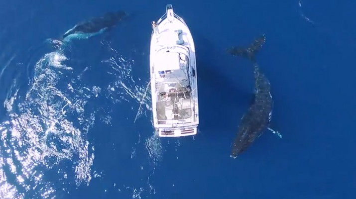 3-humpbacks-1