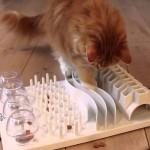 ให้แมวเหมียวเล่นเกมปริศนาอาหารจะทำให้มันมีสุขภาพและพฤติกรรมดีขึ้น