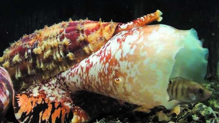 cone-snail-insulin-1