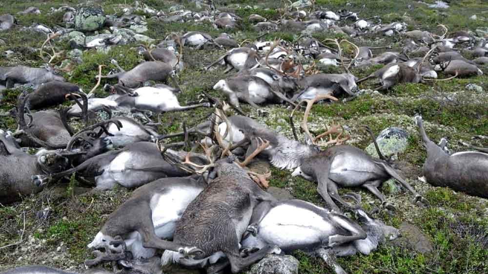 lightning-kill-reindeer-2