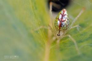 mirror-spiders-6