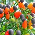ต้นไม้วิเศษออกลูกเป็นผลไม้ 40 ชนิด ออกดอกหลากสีแปลกตาน่าชม