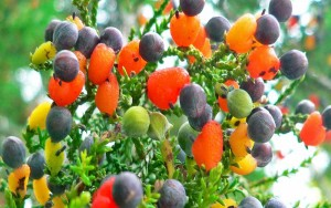 tree-of-40-fruit-1