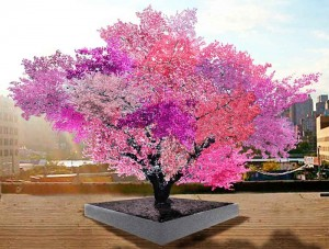tree-of-40-fruit-5