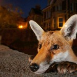 ชมภาพถ่ายสุดสวยที่เข้ารอบสุดท้ายการประกวดภาพถ่ายสัตว์ป่าแห่งปี 2016