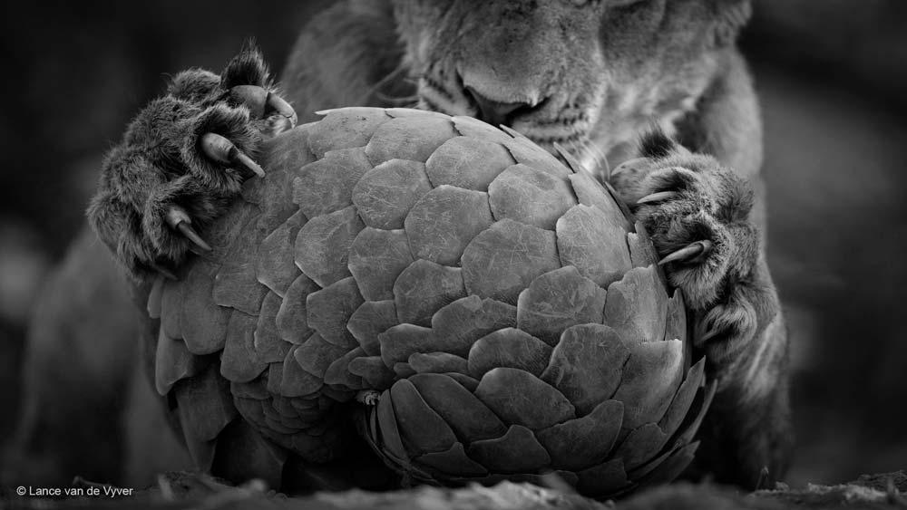 wildlife-2016-7