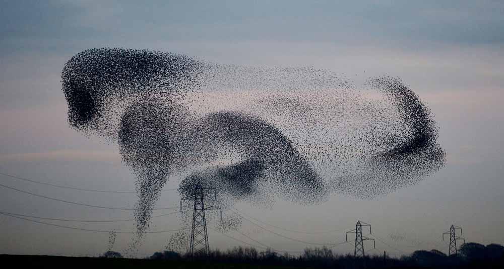 bird-fly-rule-6