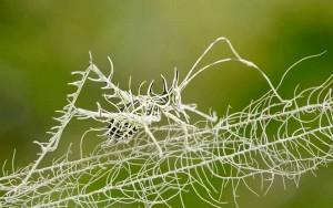 lichen-katydid