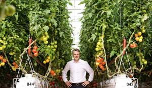 sundrop-farms-australia-3