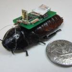นักวิจัยใช้แมลงสาบช่วยสำรวจเพื่อทำแผนที่ของพื้นที่อันตรายหลังเกิดภัยพิบัติ