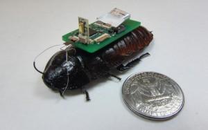 cyborg-cockroach-1