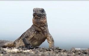 iguana-vs-snake-1