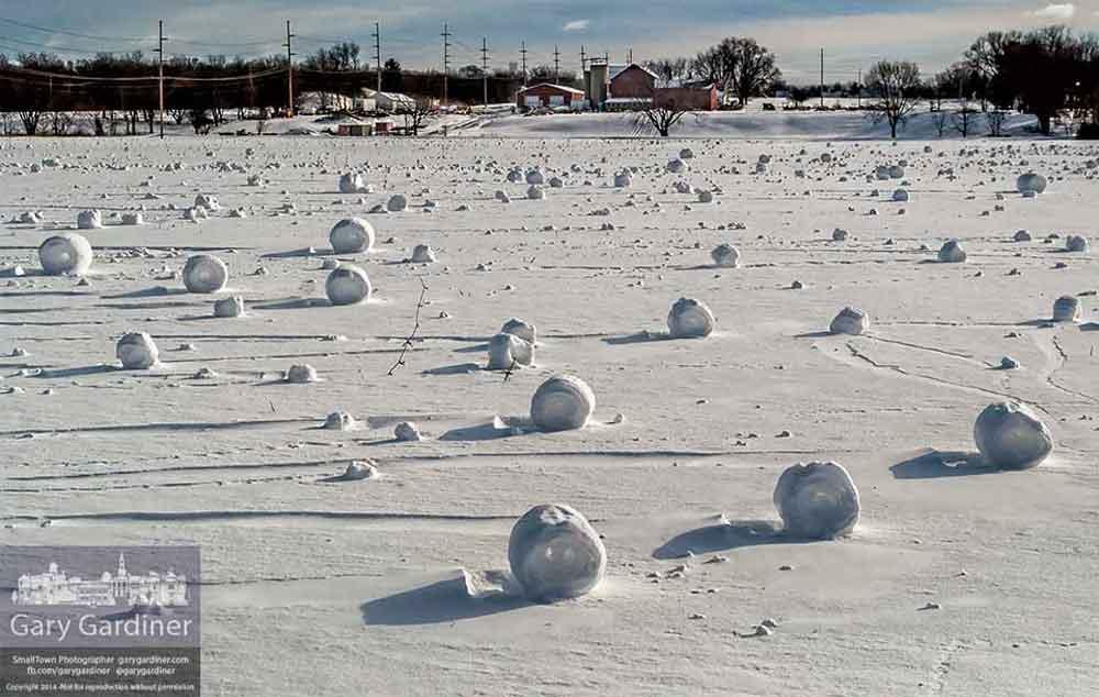 siberian-beach-snowballs-4