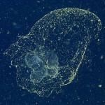 สัตว์ประหลาดแห่งท้องทะเลตัวนี้ถูกพบอีกครั้งหลังการค้นพบครั้งแรกกว่าร้อยปี