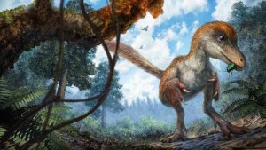 dinosaur-tail-amber-3