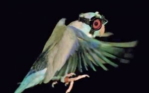 goggled-parrot-1