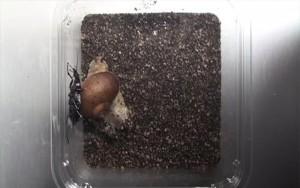 snail-shell-1