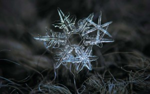 snowflake-01