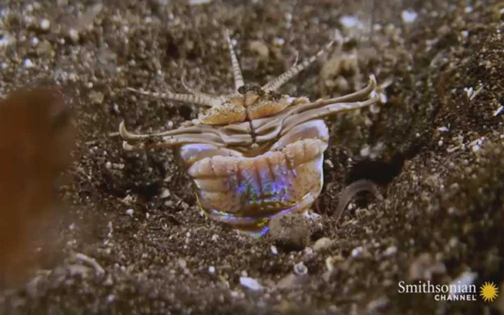 ชม 'หนอนนรก' กระชากเหยื่อหายวับไปในพื้นใต้ทะเลภายในพริบตา