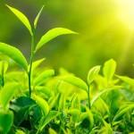 นักวิจัยใช้แสงอาทิตย์และอนุภาคนาโนผลิตก๊าซไฮโดรเจนจากมวลชีวภาพได้สำเร็จ