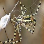 เหลือเชื่อ! แมงมุมกินอาหารแต่ละปีมากกว่าน้ำหนักของคนทั้งโลกรวมกัน