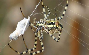 spider-annual-food-1