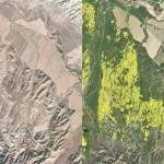 ดอกไม้บานครั้งใหญ่ในทะเลทรายแคลิฟอร์เนียขนาดเห็นได้ชัดเจนจากอวกาศ