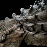 ตะลึง! พบฟอสซิลไดโนเสาร์สภาพดีเยี่ยม รูปร่างเหมือนมังกรกำลังหมอบหลับ