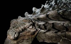 nodosaur-fossil-canada-1