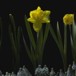 ชมวิดีโอร่นเวลา 'ดอกไม้บาน' หลากชนิดหลายสีสันที่สุดแสนประทับใจ