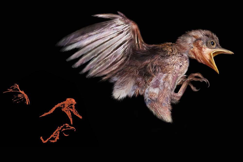 99-million-year-bird-in-amber-3