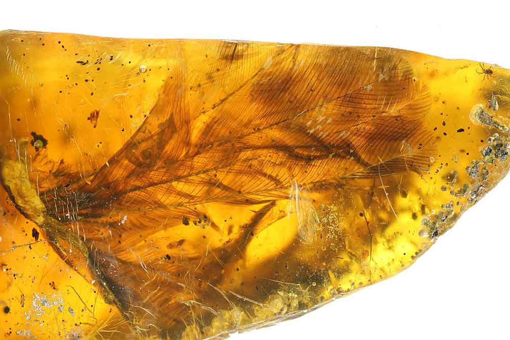 99-million-year-bird-in-amber-4
