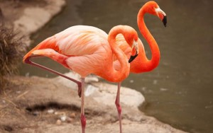 flamingo-one-leg-1