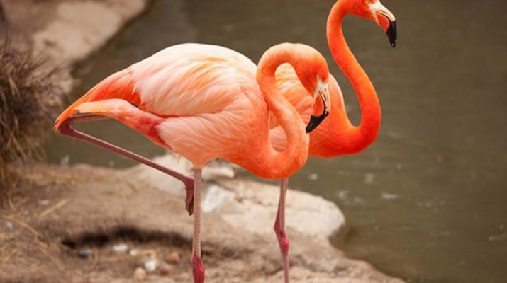 flamingo-one-leg-1
